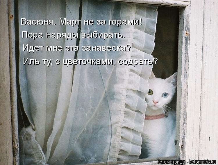 Котоматрица: Васюня. Март не за горами!  Пора наряды выбирать. Идет мне эта занавеска?  Иль ту, с цветочками, содрать?