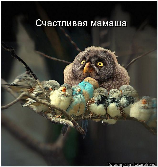 Котоматрица: Счастливая мамаша