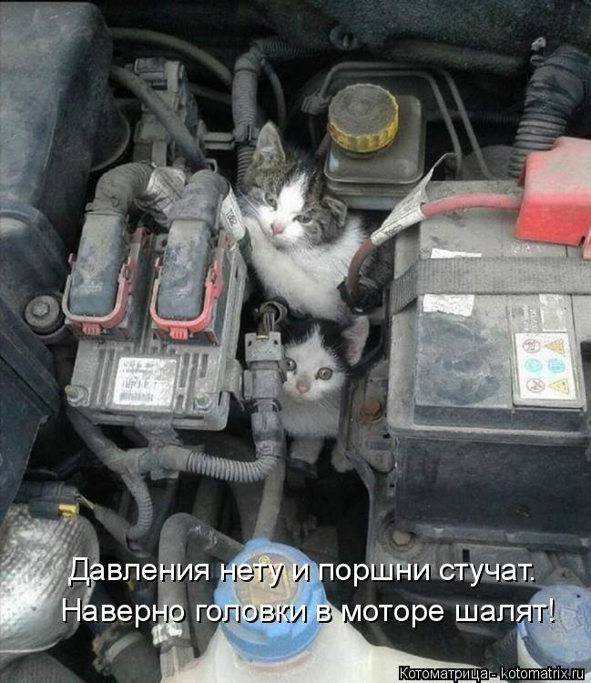 Котоматрица: Наверно головки в моторе шалят! Давления нету и поршни стучат.