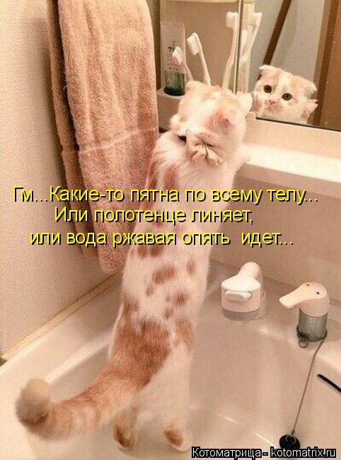 Котоматрица: Гм...Какие-то пятна по всему телу... Или полотенце линяет, или вода ржавая опять  идет...