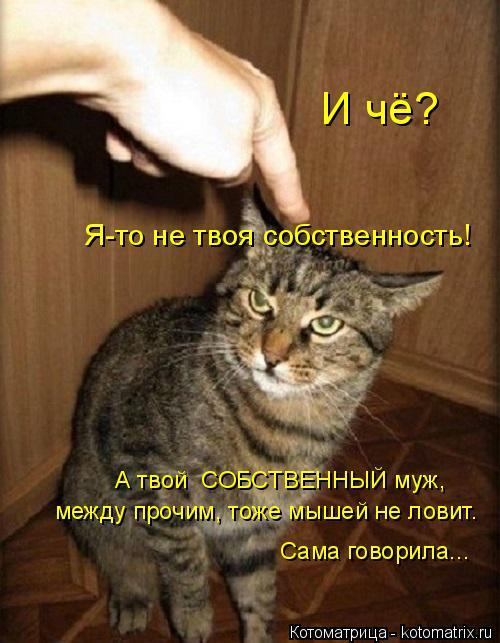 Котоматрица: И чё? Я-то не твоя собственность! А твой  СОБСТВЕННЫЙ муж, между прочим, тоже мышей не ловит. Сама говорила...