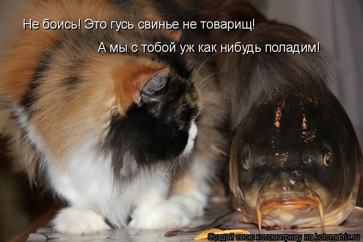 Котоматрица: Не боись! Это гусь свинье не товарищ! А мы с тобой уж как нибудь поладим!