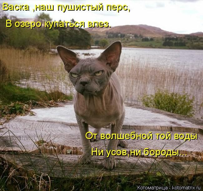 Котоматрица: Васка ,наш пушистый перс, В озеро купаться влез. От волшебной той воды Ни усов,ни бороды...
