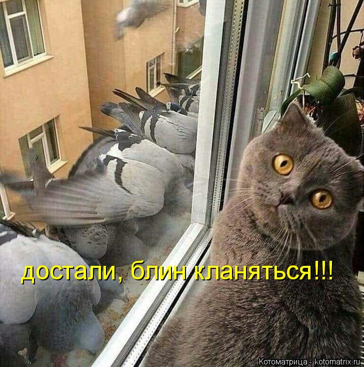 Котоматрица: достали, блин кланяться!!!