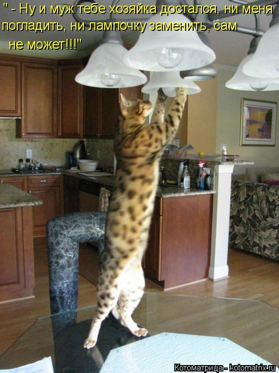 """Котоматрица: """" - Ну и муж тебе хозяйка достался, ни меня погладить, ни лампочку заменить, сам   не может!!!"""""""