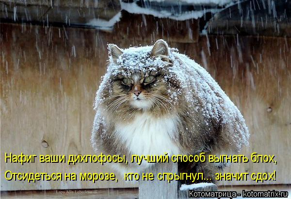 Котоматрица: Нафиг ваши дихлофосы, лучший способ выгнать блох, Отсидеться на морозе,  кто не спрыгнул... значит сдох!