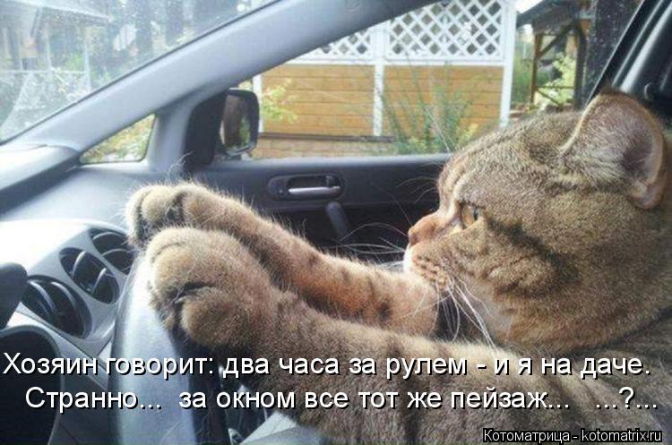 Котоматрица: Хозяин говорит: два часа за рулем - и я на даче. Странно...  за окном все тот же пейзаж...   ...?...