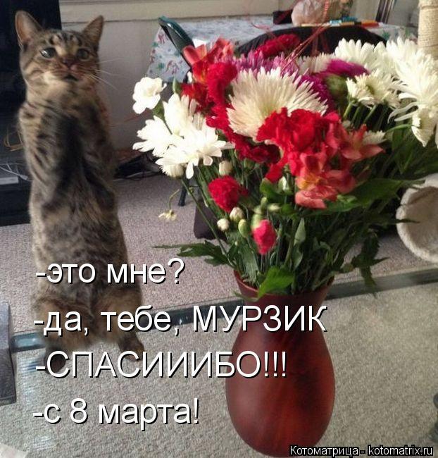 Котоматрица: -это мне? -да, тебе, МУРЗИК -СПАСИИИБО!!! -с 8 марта!