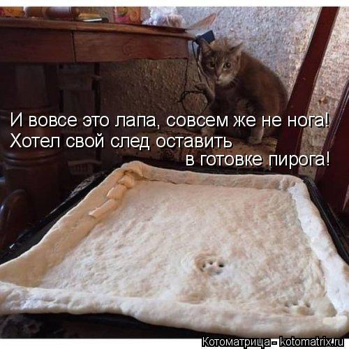 Котоматрица: И вовсе это лапа, совсем же не нога! Хотел свой след оставить  в готовке пирога!
