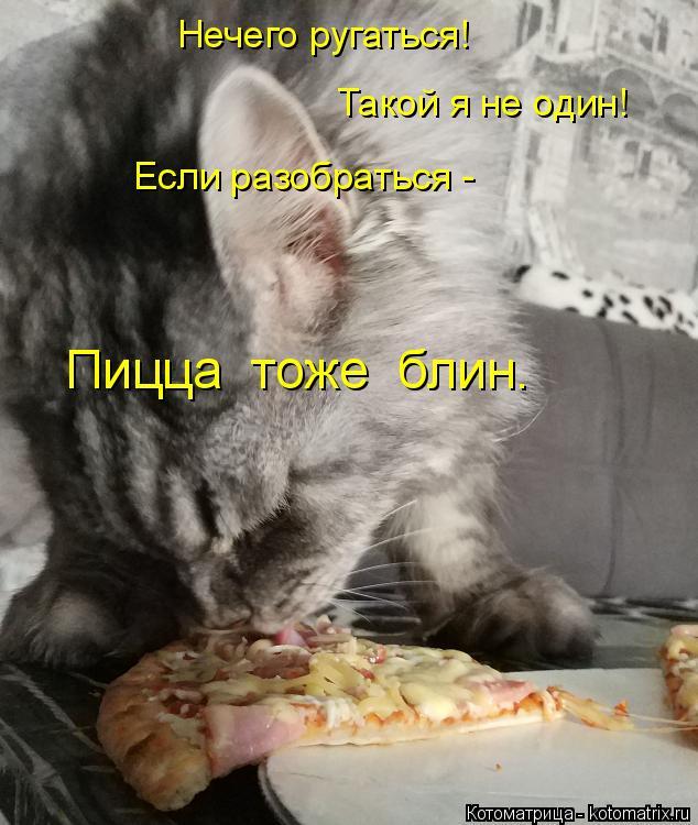Котоматрица: Нечего ругаться! Такой я не один! Если разобраться - Пицца  тоже  блин.