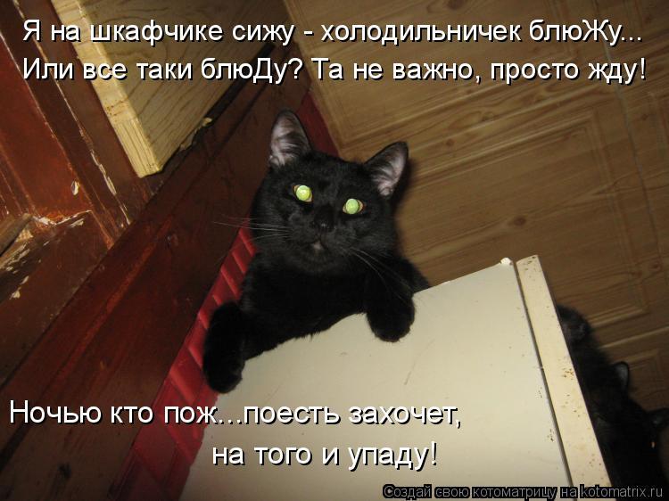 Котоматрица: Я на шкафчике сижу - холодильничек блюЖу...  Или все таки блюДу? Та не важно, просто жду! Ночью кто пож...поесть захочет, на того и упаду!