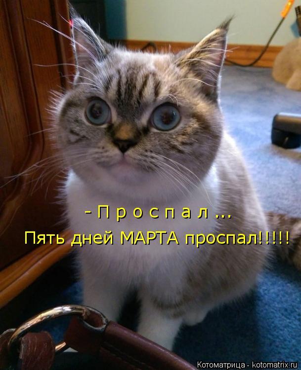 Котоматрица: - П р о с п а л ... Пять дней МАРТА проспал!!!!!