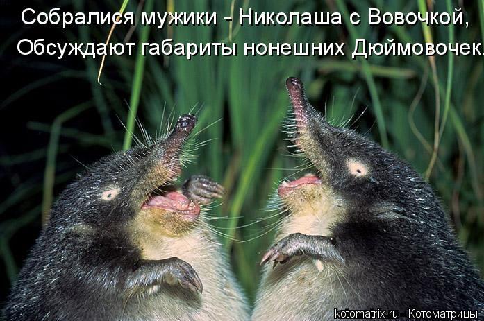 Котоматрица: Собралися мужики - Николаша с Вовочкой, Обсуждают габариты нонешних Дюймовочек.
