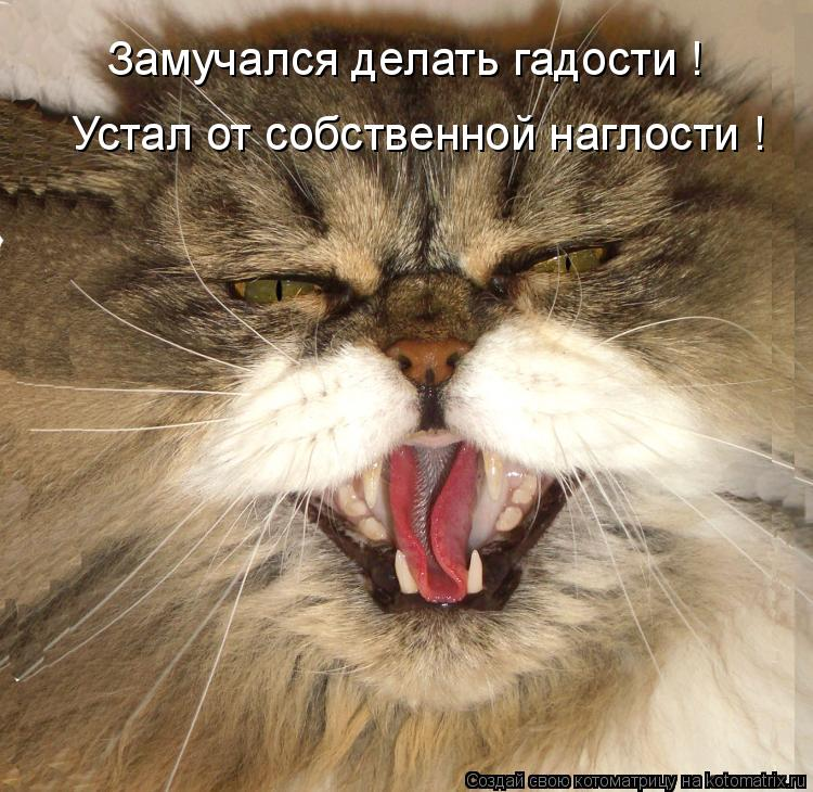 Котоматрица: Замучался делать гадости ! Устал от собственной наглости !