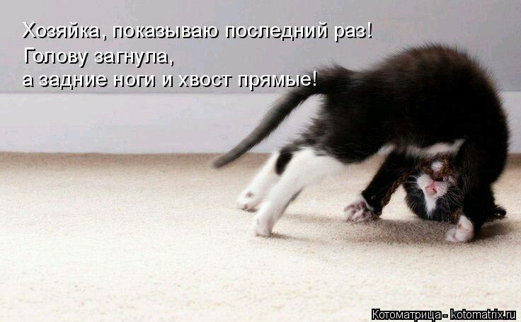 Котоматрица: Хозяйка, показываю последний раз! Голову загнула, а задние ноги и хвост прямые!