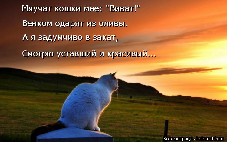 """Котоматрица: Мяучат кошки мне: """"Виват!"""" Венком одарят из оливы. Смотрю уставший и красивый... А я задумчиво в закат,"""