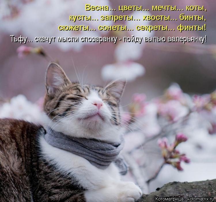Котоматрица: Весна... цветы... мечты... коты, кусты... запреты... хвосты... бинты, Тьфу... скачут мысли спозаранку - пойду выпью валерьянку! Тьфу... скачут мысли сп