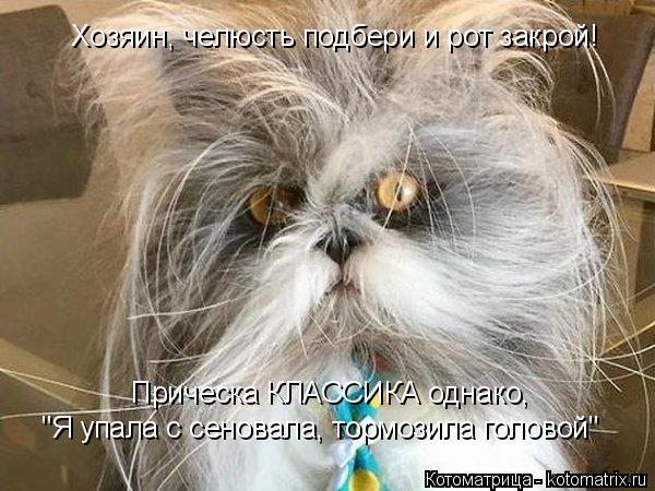 """Котоматрица: Прическа КЛАССИКА однако, """"Я упала с сеновала, тормозила головой"""" Хозяин, челюсть подбери и рот закрой!"""