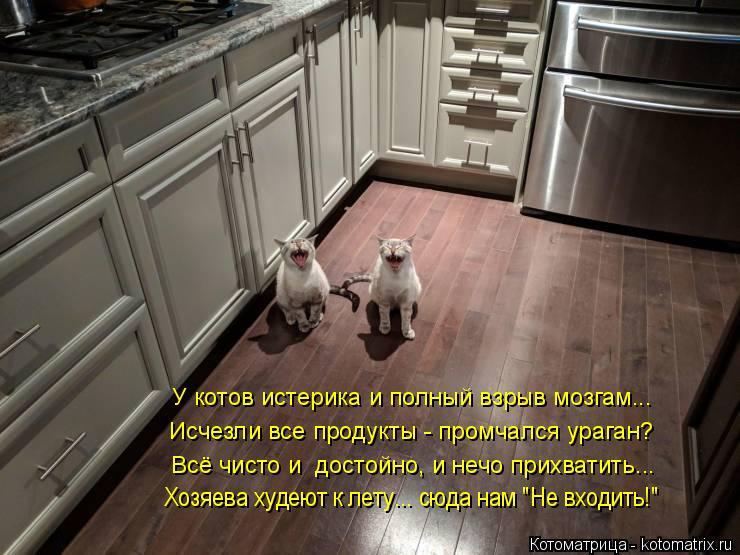 Котоматрица: У котов истерика и полный взрыв мозгам... Исчезли все продукты - промчался ураган? Всё чисто и  достойно, и нечо прихватить...  Хозяева худеют к