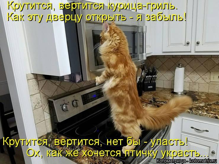 Котоматрица: Крутится, вертится курица-гриль. Как эту дверцу открыть - я забыль! Крутится, вертится, нет бы - упасть! Ох, как же хочется птичку украсть...