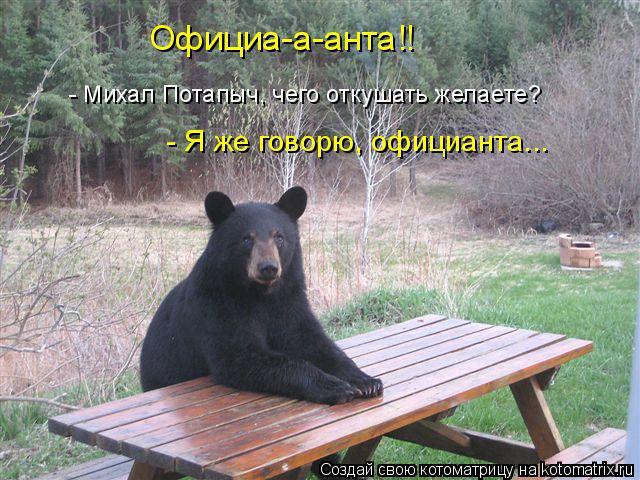 Котоматрица: - Михал Потапыч, чего откушать желаете? - Я же говорю, официанта... Официа-а-анта!!