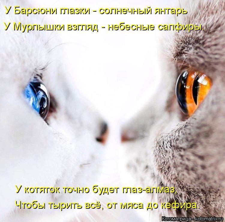 Котоматрица: У Барсюни глазки - солнечный янтарь У Мурлышки взгляд - небесные сапфиры. У котяток точно будет глаз-алмаз,  Чтобы тырить всё, от мяса до кефи?