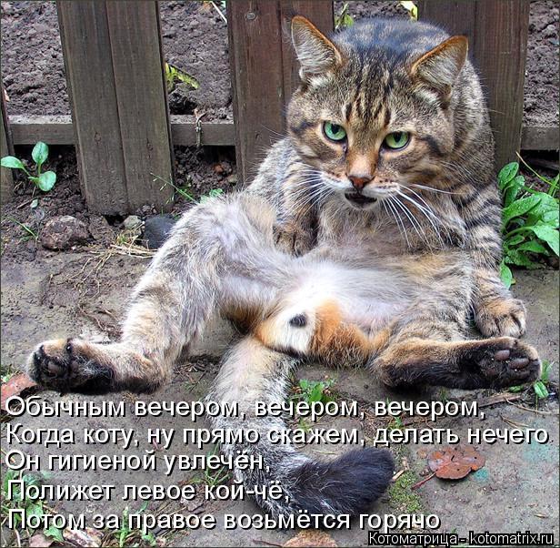 Котоматрица: Обычным вечером, вечером, вечером, Когда коту, ну прямо скажем, делать нечего Он гигиеной увлечён, Полижет левое кой-чё, Потом за правое возь?