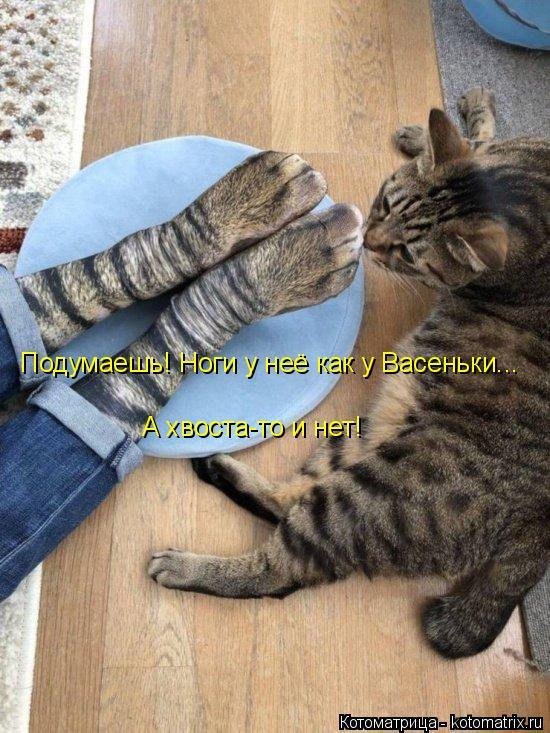 Котоматрица: Подумаешь! Ноги у неё как у Васеньки... А хвоста-то и нет!