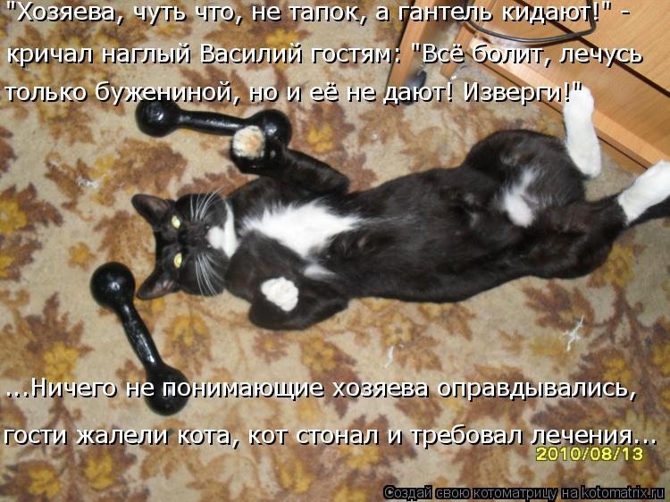 """Котоматрица: гости жалели кота, кот стонал и требовал лечения... ...Ничего не понимающие хозяева оправдывались,   """"Хозяева, чуть что, не тапок, а гантель кид?"""