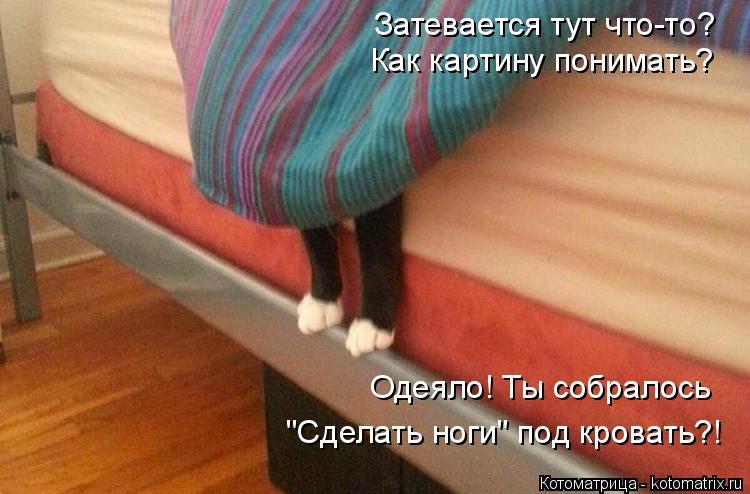 """Котоматрица: Затевается тут что-то? Как картину понимать? Одеяло! Ты собралось """"Сделать ноги"""" под кровать?!"""