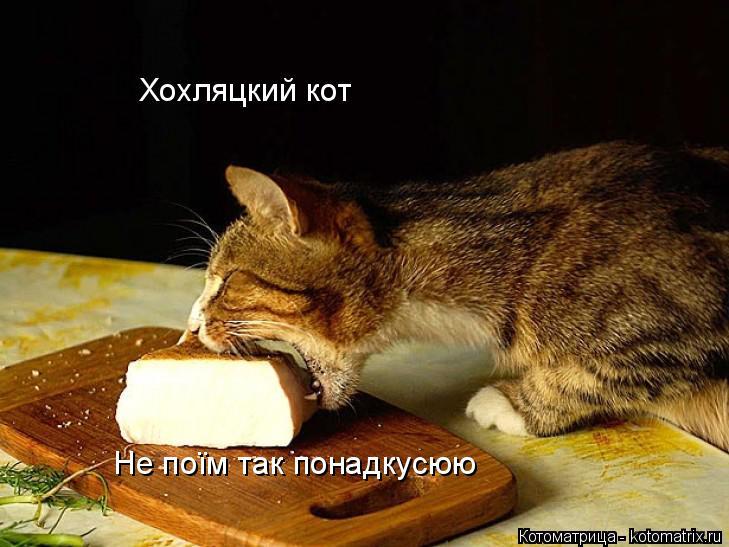 Котоматрица: Не поїм так понадкусюю Хохляцкий кот