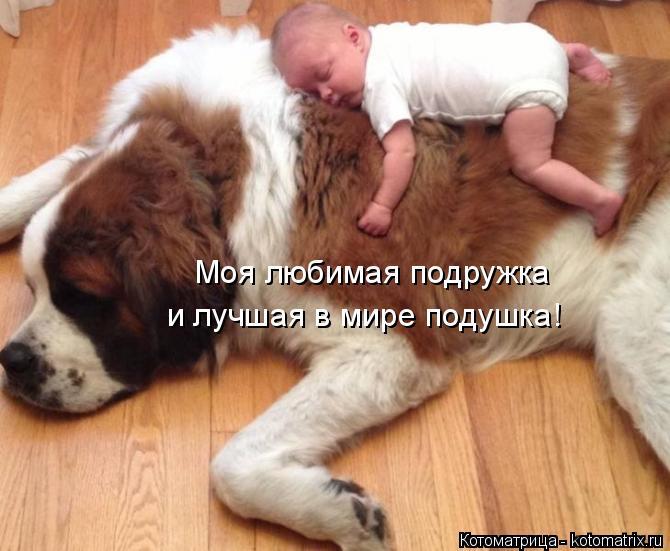 Котоматрица: Моя любимая подружка и лучшая в мире подушка!