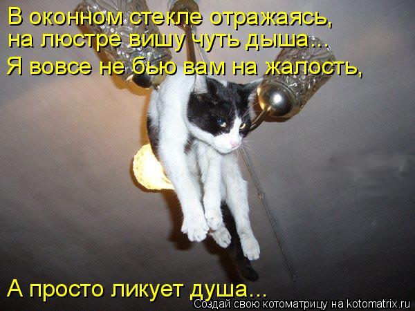 Котоматрица: В оконном стекле отражаясь,  на люстре вишу чуть дыша... Я вовсе не бью вам на жалость,  А просто ликует душа...