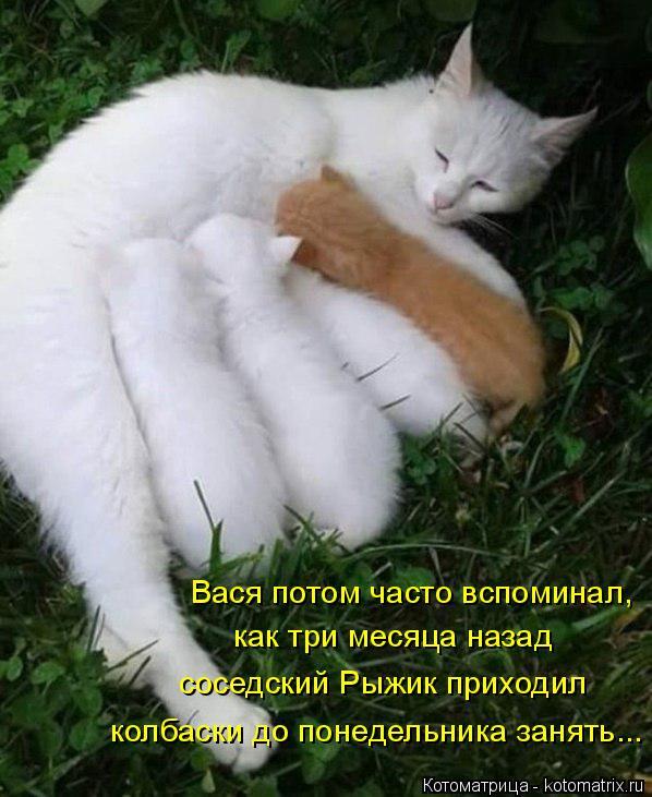 Котоматрица: Вася потом часто вспоминал,  как три месяца назад соседский Рыжик приходил колбаски до понедельника занять...