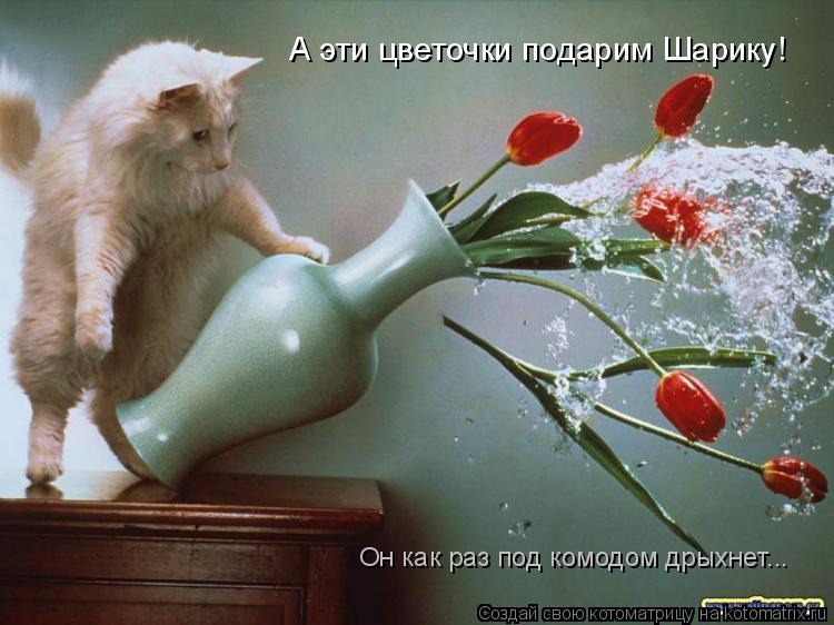 Котоматрица: А эти цветочки подарим Шарику! Он как раз под комодом дрыхнет...