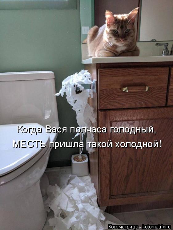 Котоматрица: Когда Вася полчаса голодный,  МЕСТЬ пришла такой холодной!