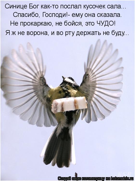 Котоматрица: Синице Бог как-то послал кусочек сала... Спасибо, Господи!- ему она сказала. Не прокаркаю, не бойся, это ЧУДО! Я ж не ворона, и во рту держать не ?
