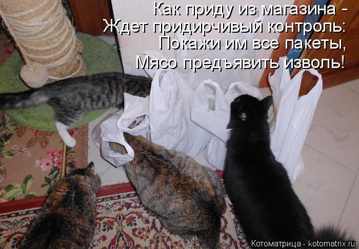 Котоматрица: Как приду из магазина - Ждет придирчивый контроль: Покажи им все пакеты, Мясо предъявить изволь!