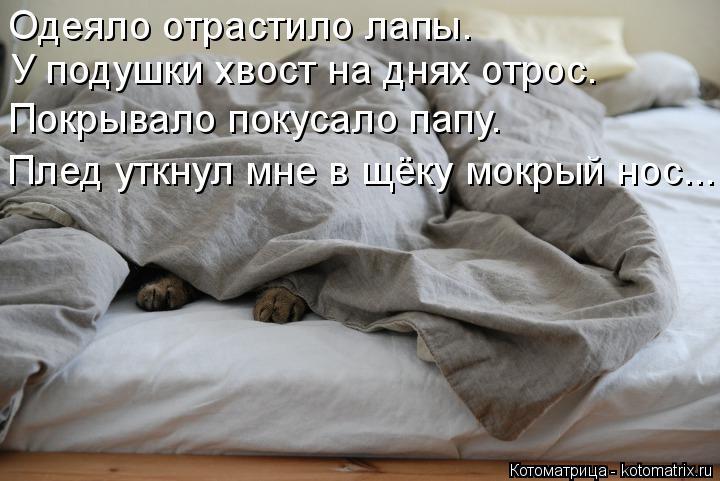Котоматрица: Одеяло отрастило лапы. У подушки хвост на днях отрос. Покрывало покусало папу. Плед уткнул мне в щёку мокрый нос...