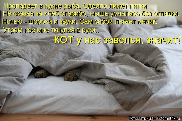 Котоматрица: Пропадает в кухне рыба. Одеяло лижет пятки. Не сказав за хлеб спасибо, мышь умчалась без оглядки. Ночью - шорохи и звуки. Сам собой летает мяч?