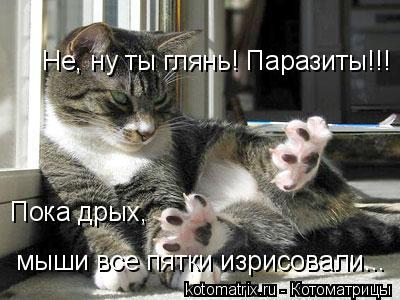Котоматрица: Не, ну ты глянь! Паразиты!!! Пока дрых,  мыши все пятки изрисовали...