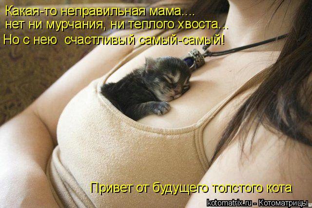 Котоматрица: Какая-то неправильная мама.... нет ни мурчания, ни теплого хвоста... Но с нею  счастливый самый-самый! Привет от будущего толстого кота