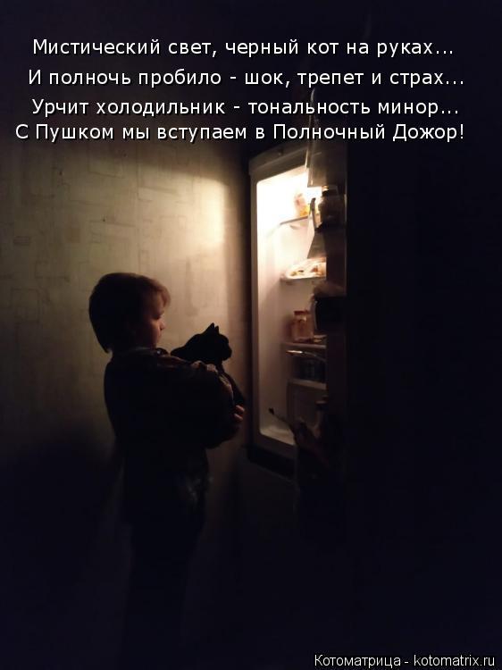 Котоматрица: Мистический свет, черный кот на руках... И полночь пробило - шок, трепет и страх... Урчит холодильник - тональность минор... С Пушком мы вступаем