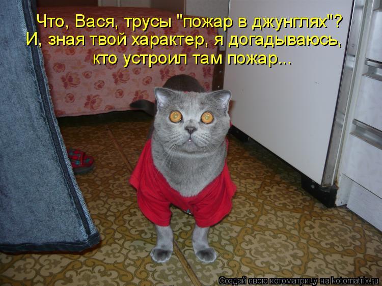 """Котоматрица: Что, Вася, трусы """"пожар в джунглях""""? И, зная твой характер, я догадываюсь, кто устроил там пожар..."""