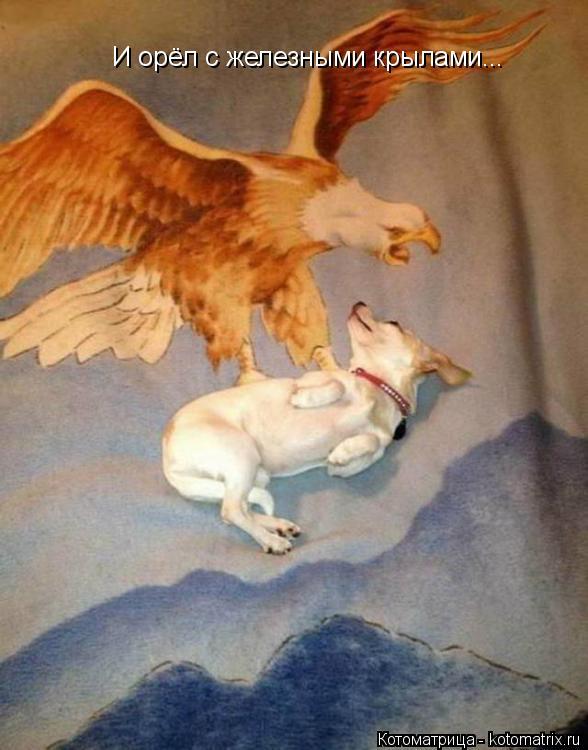 Котоматрица: И орёл с железными крылами...