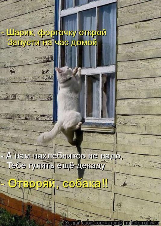 Котоматрица: - А нам нахлебников не надо, - Шарик, форточку открой Запусти на час домой Тебе гулять ещё декаду - Отворяй, собака!!