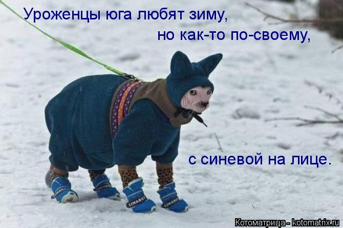 Котоматрица: Уроженцы юга любят зиму, но как-то по-своему, с синевой на лице.