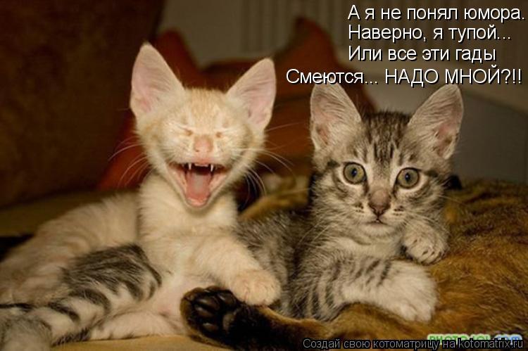 Котоматрица: Смеются... НАДО МНОЙ?!! А я не понял юмора. Наверно, я тупой... Или все эти гады