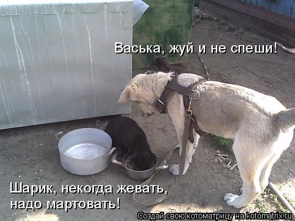 Котоматрица: Васька, жуй и не спеши!  Шарик, некогда жевать, надо мартовать!