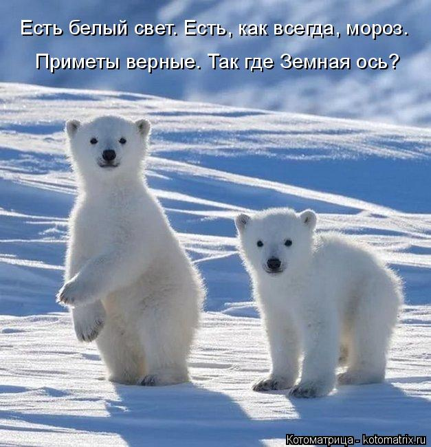 Котоматрица: Есть белый свет. Есть, как всегда, мороз. Приметы верные. Так где Земная ось?